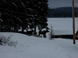 moose-001.jpg